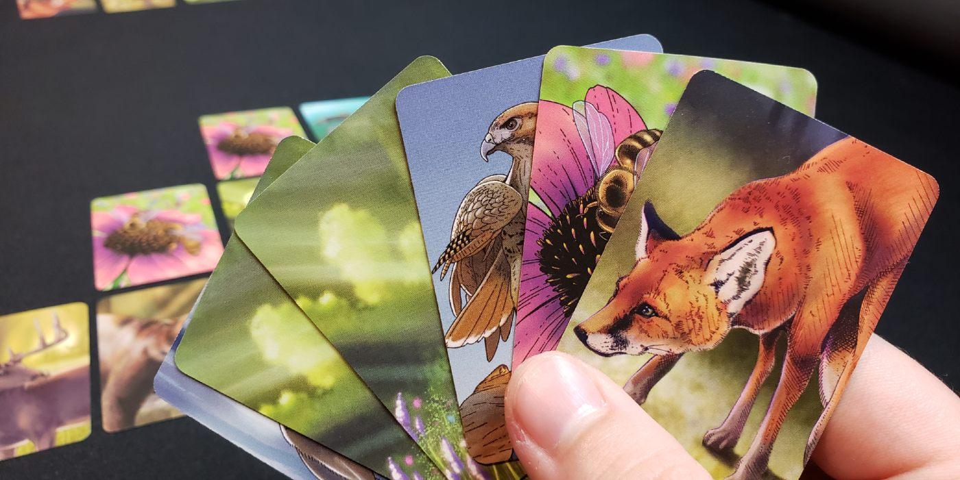 Ecosystem cards
